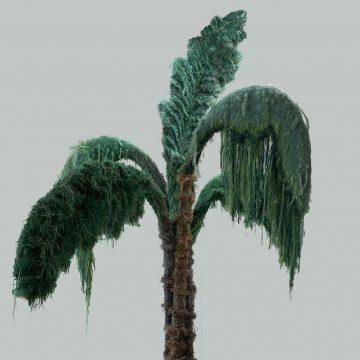 Palma helhed